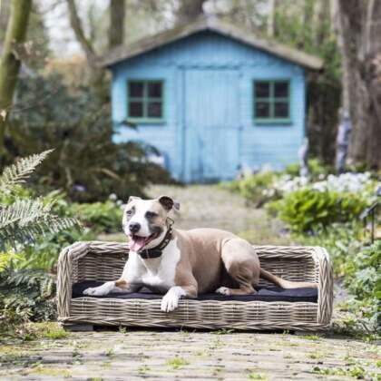 Rieten hondenmand middel