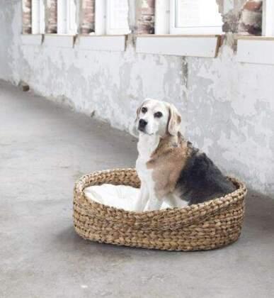 Hondenmand Gangni 'Yoshiko Home' L
