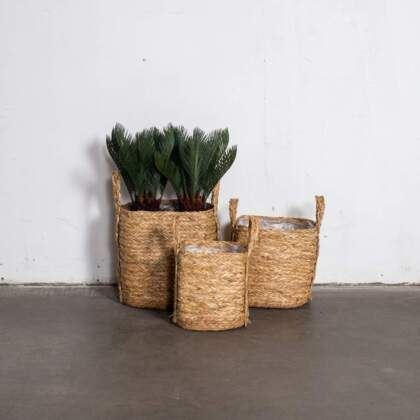basket_square_watergrass_sfeer_118536