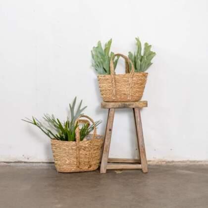 planterbag_watergrass_sfeer_118540